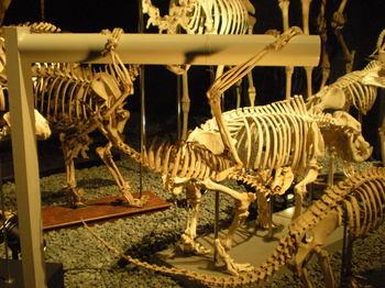 大哺乳類展_09.JPG